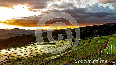 Tijdtijdspanne, zonsondergang over de padievelden stock video