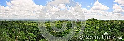 Tikal rainforest, Guatemala