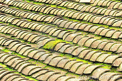Tile roof with moss