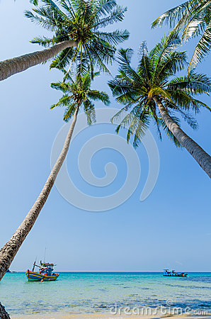 Tilted coconut trees by the beach with the boat and blue sky