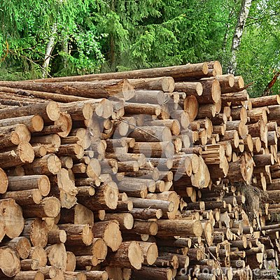 Free Timber Harvesting For Lumber Industry Or  Wooden Housing Constru Royalty Free Stock Images - 61748989