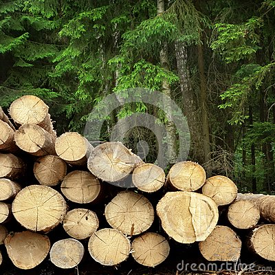 Free Timber Harvesting For Lumber Industry Or  Wooden Housing Constru Royalty Free Stock Photo - 61749395