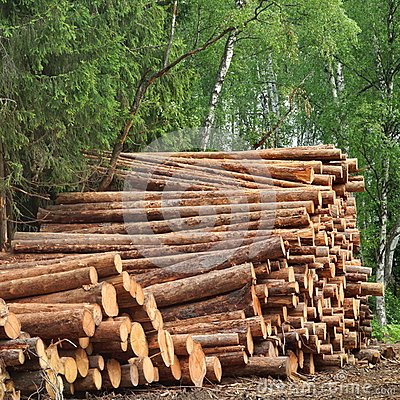 Free Timber Harvesting For Lumber Industry Or  Wooden Housing Construction Stock Photo - 61749520