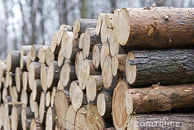 Timber heap in the woods