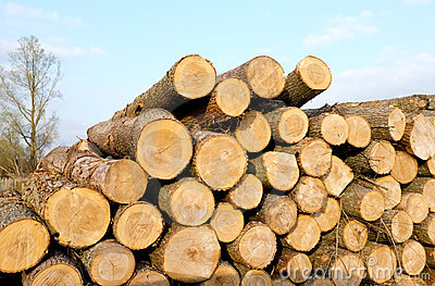 Timber Log stack