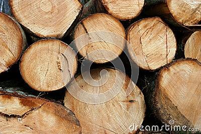 Timber Logs Wood Grain