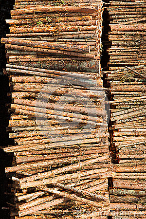 Timber resources