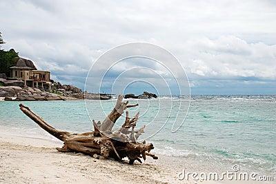 Timber on sand