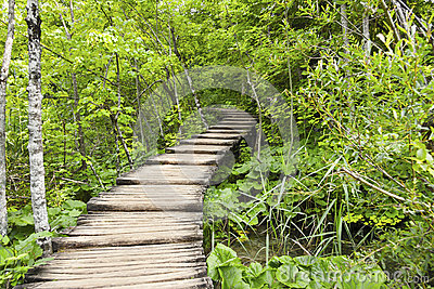 Timber walkway in forest in Plitvice, Croatia