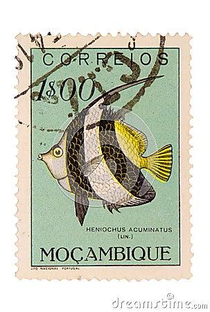 Timbre-poste de la Mozambique de cru