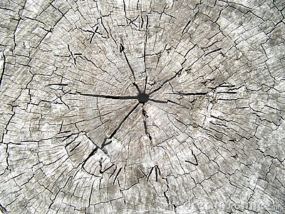 Time in Wood