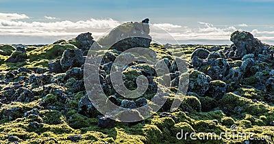 Timelapse islandese dell'ambiente del muschio che fa scorrere video archivi video