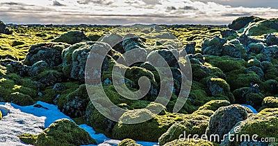 Timelapse islandese dell'ambiente del muschio che fa scorrere video video d archivio
