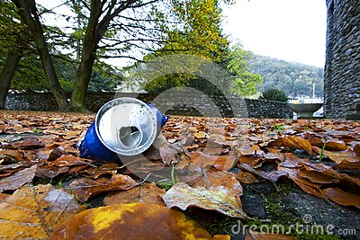 Tin among the leaves