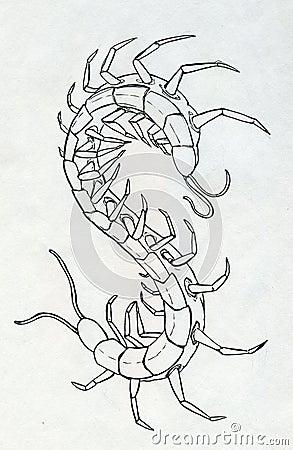 Tinte gezeichneter Hundertfüßer