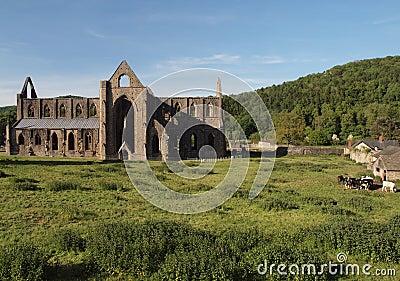 Tintern Abbey landscape