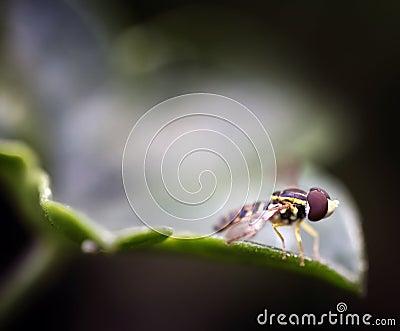 Tiny Bee on Leave Macro