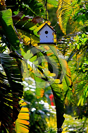 Free Tiny Bird House Surrounded By Banana Trees At Sunset In The Florida Keys Stock Images - 92219064