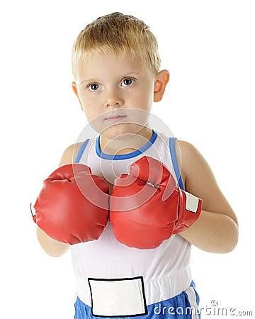 Tiny Boxer