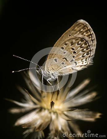 Free Tiny Butterfly Going To Sleep On The Dead Flower Stock Photo - 122431670