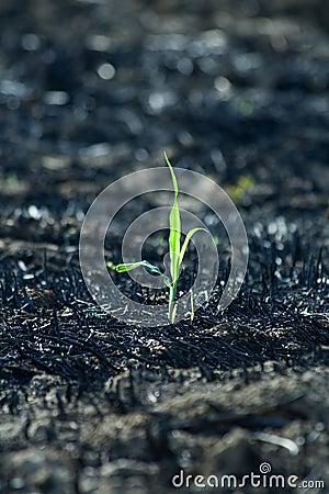Free Tiny Green Plant Stock Photos - 3391143