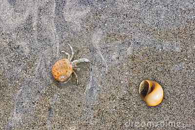 Tiny hermit crab crawling under water on sand