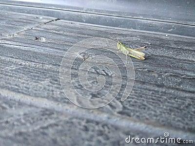 Tiny locust wallpaper Stock Photo