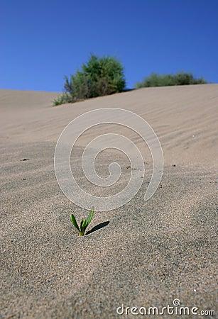 Tiny plant in the desert