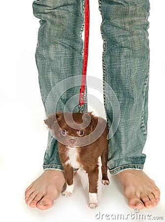 Free Tiny Puppy And Big Feet Stock Image - 13604681