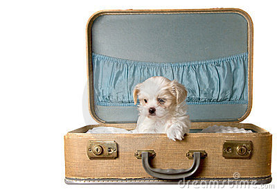 Tiny puppy in a vintage suitcase