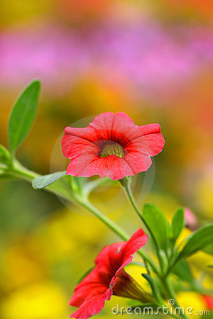 Free Tiny Red Flowers Royalty Free Stock Photography - 12191637