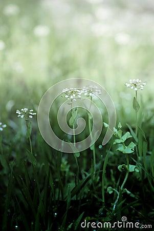Gentle Spring flowers