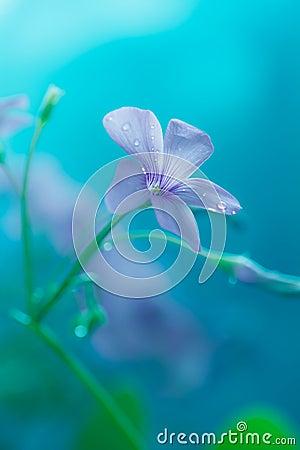 Tiny summer flower