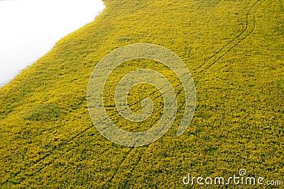 Tire track in wildflower