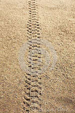 Tire tracks in sand