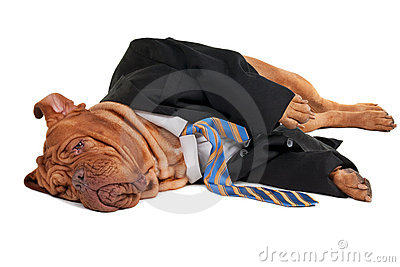 Tired businessman dog