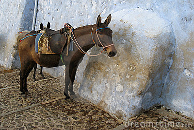 Tired, colorful donkey on Santorini, Greece