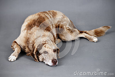 Tired funny looking dog