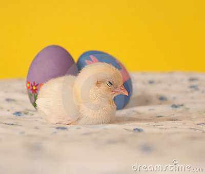 Tired little Easter chick sleeping