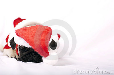 tired Santa Claus Puppy