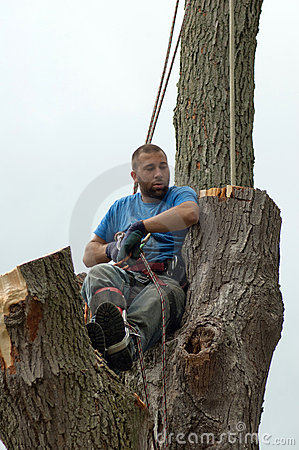 tired tree worker