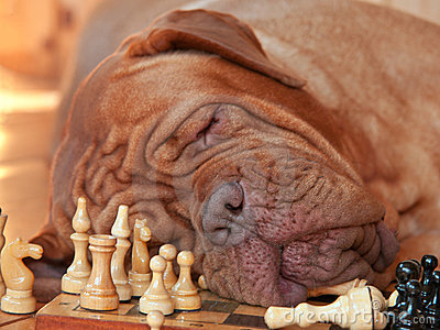 Tiresome Game Stock Photography - Image: 1