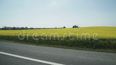 Tiro aéreo de Grey Car Driving en el camino al lado del campo de flores y de tierras de labrantío amarillas almacen de metraje de vídeo