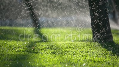 Tiro artístico de uma água que pulveriza em público o parque com a profundidade da sombra de campo video estoque