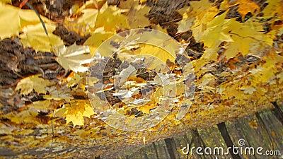 Tiro de gerencio do baixo ângulo na floresta do outono video estoque