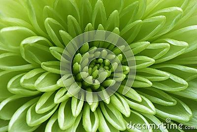 Tiro macro de uma flor verde