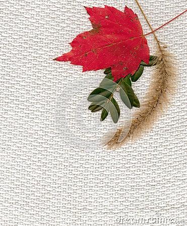 Tissu d automne