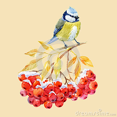 Free Titmouse Bird And Ashberry Stock Photography - 77922292