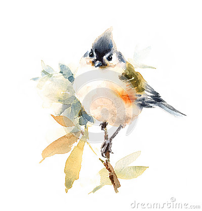 Free Titmouse Bird Watercolor Illustration Hand Painted Isolated On White Background Royalty Free Stock Photos - 74020538