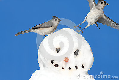 Titmouse On A Snowman
